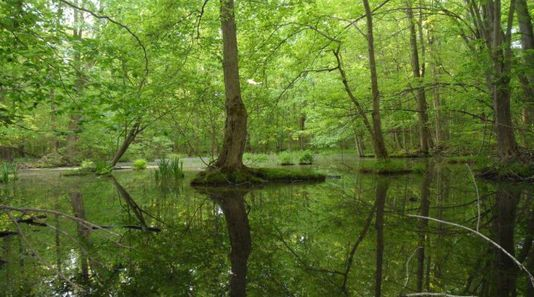 Thundering Waters Forest
