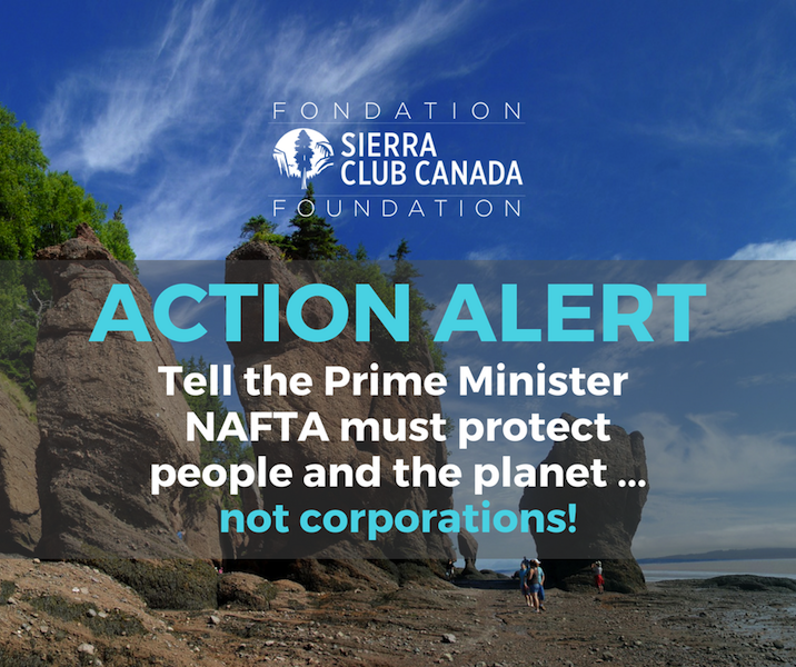 Action Alert - take action now!