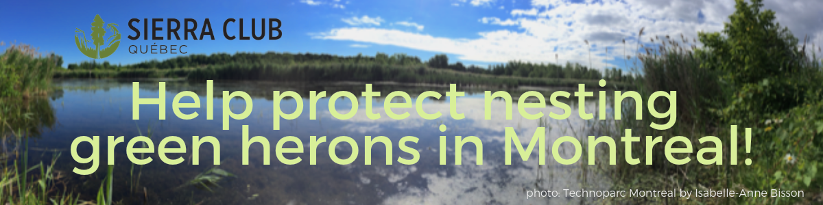 Help protect nesting green herons in Montreal!