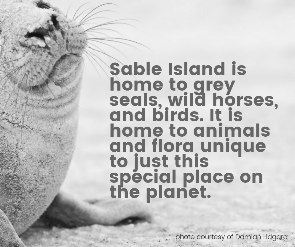 Sable Island is home to unique species.