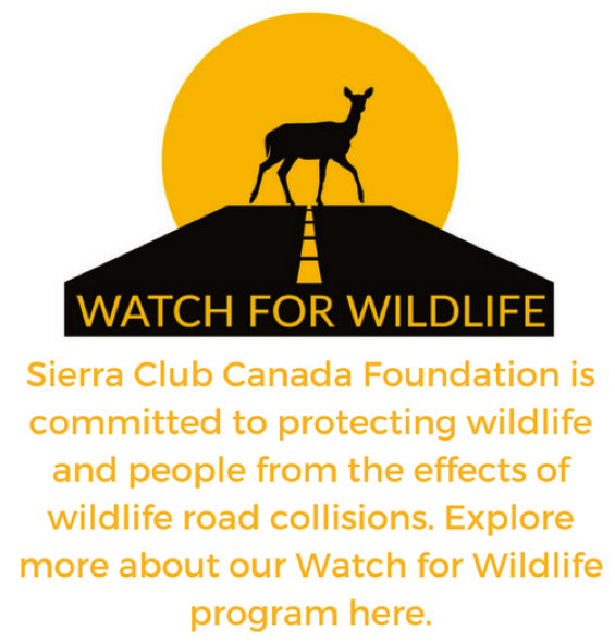 Sierra Club is committed to protecting wildlife and people from the effects of road collisions