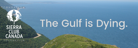 The Gulf Is Dying.