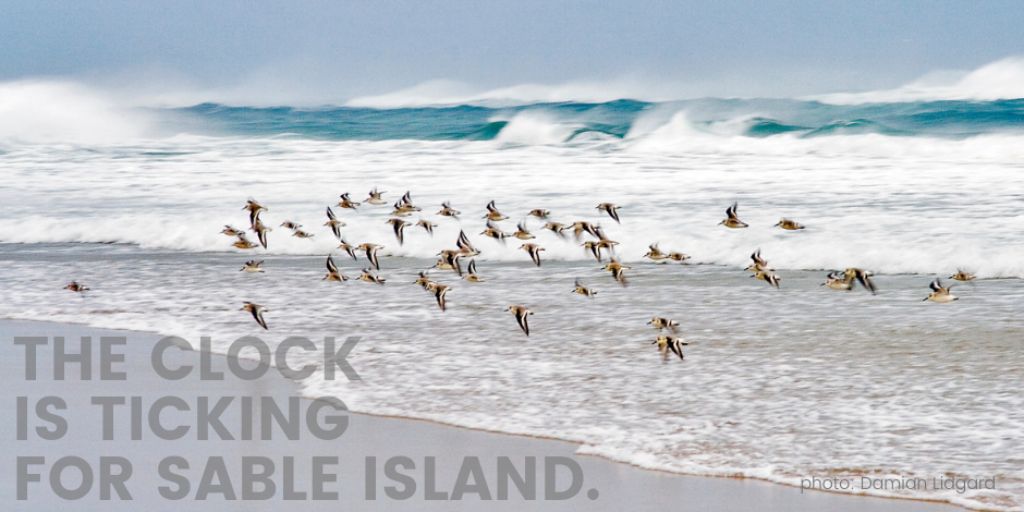 The clock is ticking for Sable Island.