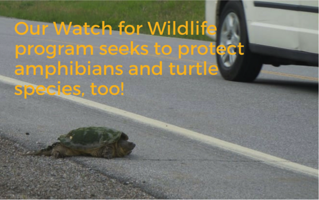 Watch for Wildlife program will protect turtle species, too!