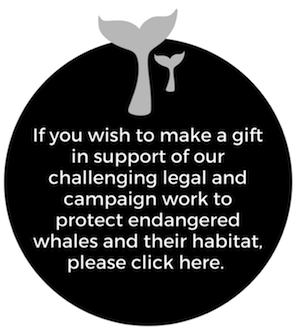 If you wish to support our work to protect endangered whales, please click here.