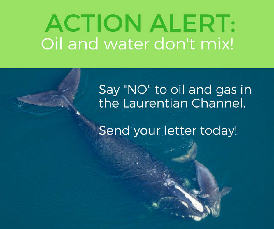 Action Alert - say no to oil and gas in the Laurentian Channel