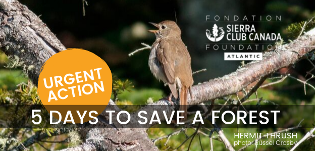 Take Action To Save Migratory Birds In Nova Scotia