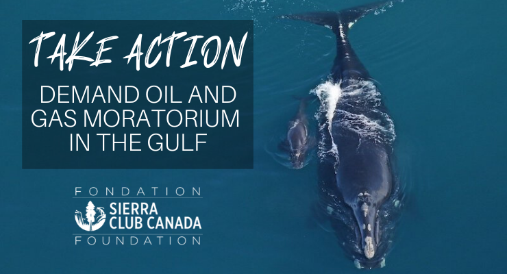 Take Action - demand oil and gas moratorium in the Gulf of St. Lawrence