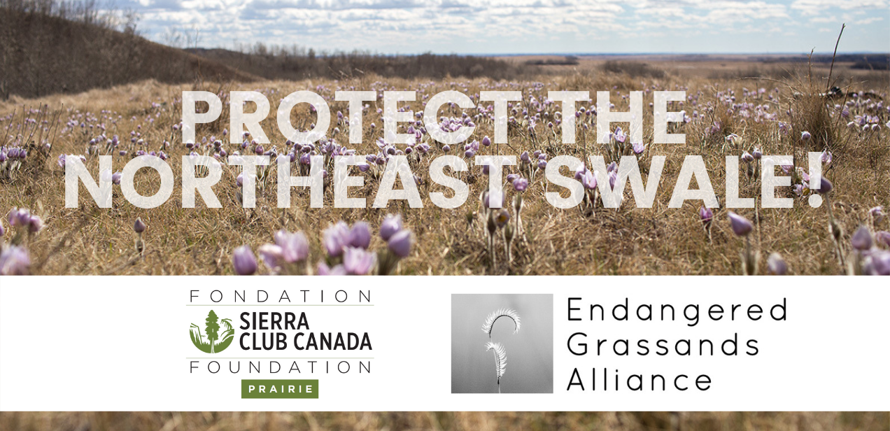 Protect The Northeast Swale