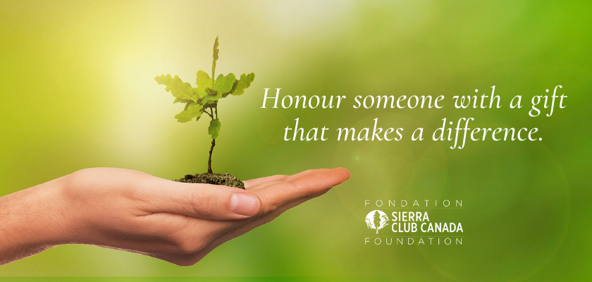 Honour someone with a gift that makes a difference.