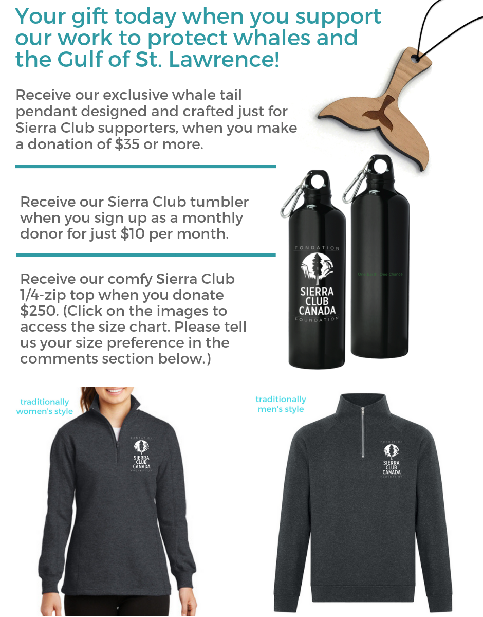 Your gift today when you donate to save right whales