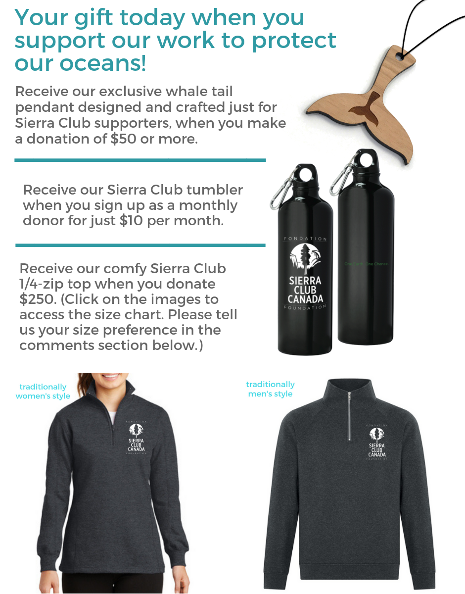 Your gift today when you help support our ocean work