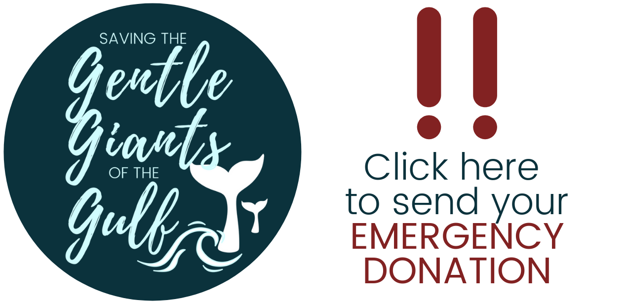 Click here to make your Emergency donation.