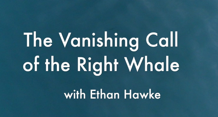 Vanishing Call of the Right Whale with Ethan Hawke