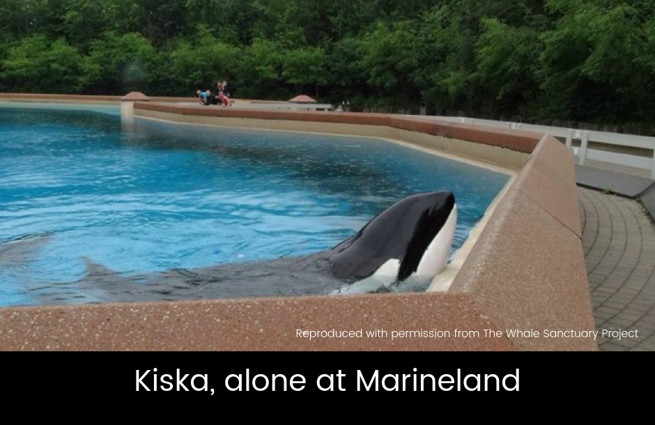 Dolphin Captivity blog June 2019 images-1.png
