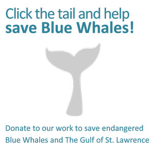 Click here to help save Blue Whales