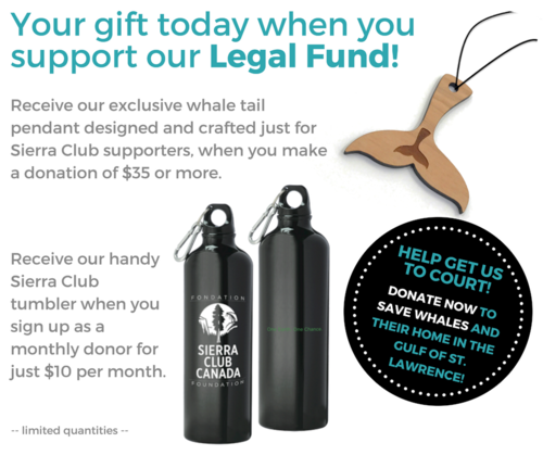 Your gift today when you support our Legal Fund!