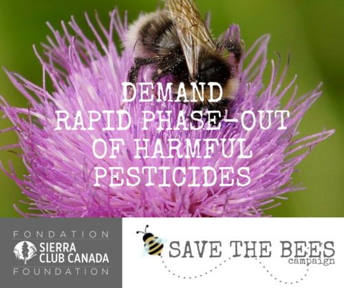 Demand Rapid Phase-Out Of Harmful Pesticides