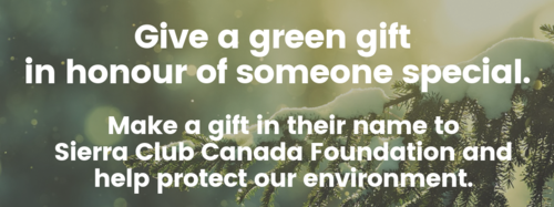 Give a green gift in honiur of someone special