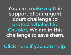 You can make a gift here to help save right whales.