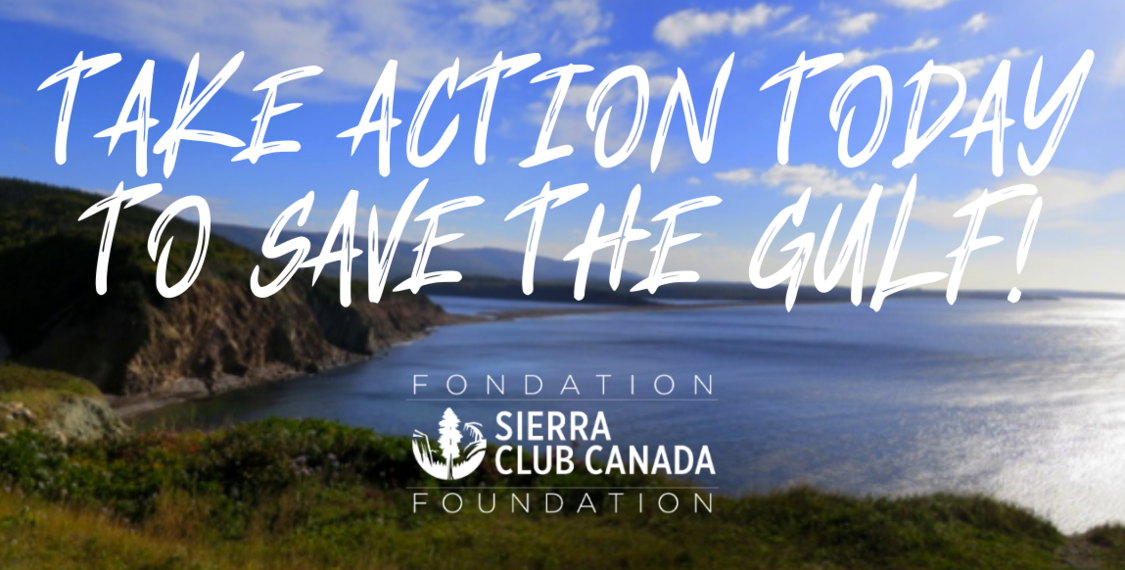 Take Action Today To Save The Gulf