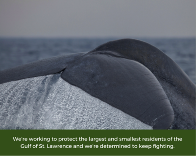 Working to protect largest and smallest residents of the Gulf.