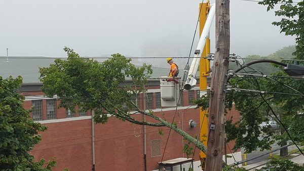 A tree in Halifax receives maintenance after a branch is dislodged in a storm