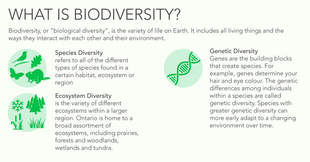 the role of quebec biodiversity Elcome to the quebec biodiversity website there is little doubt that within the  last few years, society has become more aware of the value of the world's.