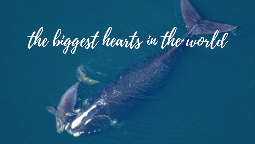 The biggest hearts in the world