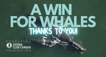 A win for whales - thanks to you!