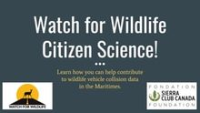 Learn how you can contribute to Watch for Wildlife's citizen science initiative using the iNaturalist app.