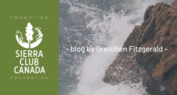 blog by Gretchen Fitzgerald