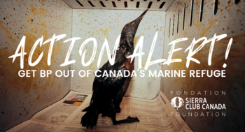 TAKE ACTION - Ministers, You Need to Get BP Out of Canada's Marine Refuge